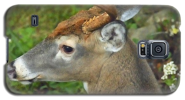Galaxy S5 Case featuring the photograph Whitetailed Deer Buck by A Gurmankin