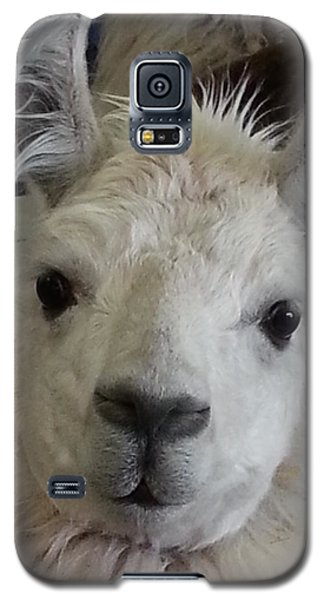 Galaxy S5 Case featuring the photograph Who Me Llama by Caryl J Bohn