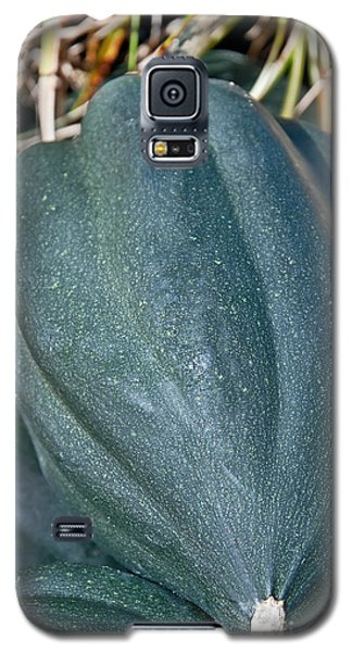 Whole Acorn Squash Art Prints Galaxy S5 Case