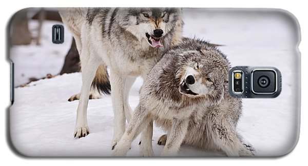 Galaxy S5 Case featuring the photograph Who's The Boss by Wolves Only