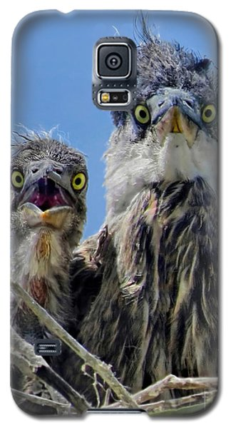 Wide Eyed Baby Herons Galaxy S5 Case by Jennie Breeze