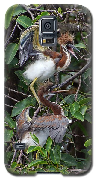 Wild And Crazy Galaxy S5 Case