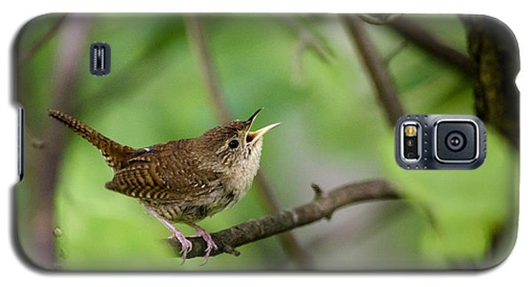 Wild Birds - House Wren Galaxy S5 Case by Christina Rollo