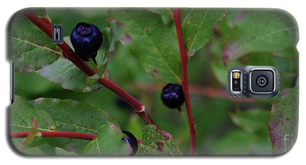 Galaxy S5 Case featuring the photograph Wild Blueberries by Amanda Holmes Tzafrir