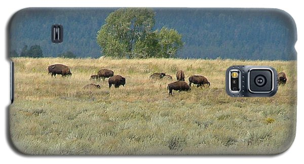 Galaxy S5 Case featuring the painting Wild Buffalo In The Grand Tetons by Jennifer Muller