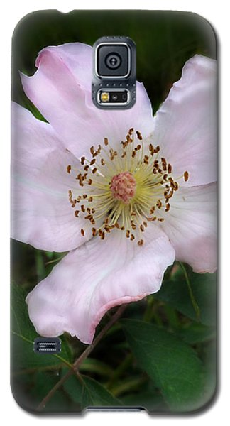 Galaxy S5 Case featuring the photograph Wild Carolina Rose by William Tanneberger