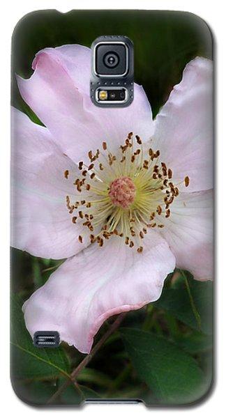Wild Carolina Rose Galaxy S5 Case