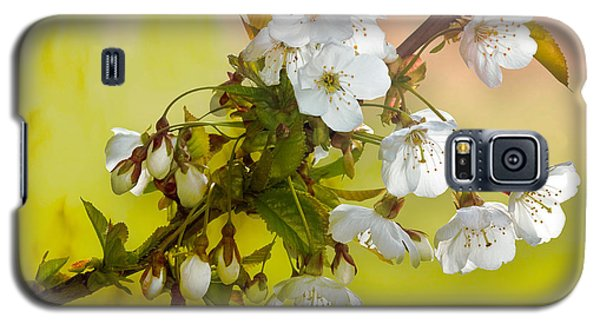 Galaxy S5 Case featuring the photograph Wild Cherry Blossom Cluster by Jane McIlroy