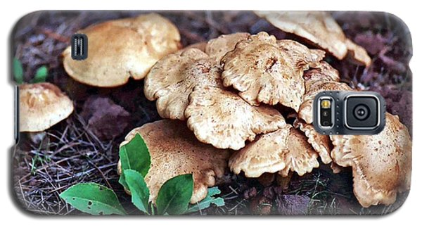 Galaxy S5 Case featuring the photograph Wild Chicken Mushrooms by Juls Adams