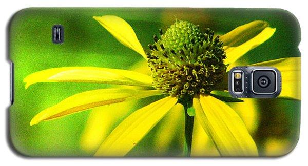 Wild Coneflower Secret Meadow Sandia Mountains Albuquerque New Mexico Galaxy S5 Case by Douglas MooreZart