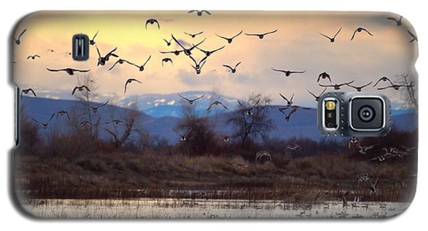 Galaxy S5 Case featuring the photograph Wild Ducks And Geese by Lynn Hopwood