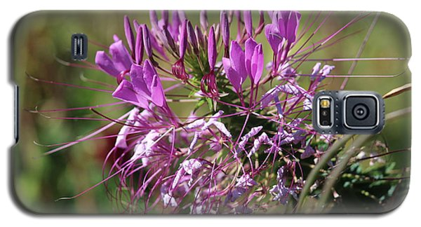 Galaxy S5 Case featuring the photograph Wild Flower by Cynthia Snyder