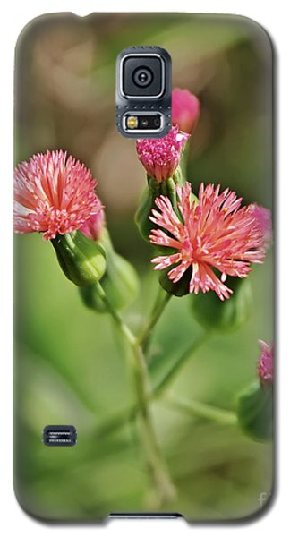 Galaxy S5 Case featuring the photograph Wild Flower by Olga Hamilton