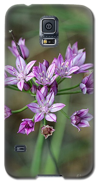 Wild Garlic - Allium Drummondii Galaxy S5 Case