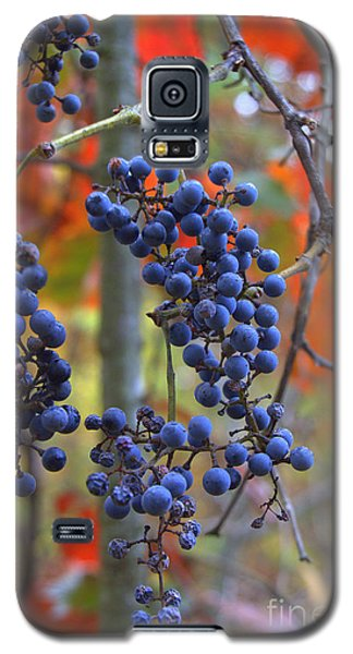 Galaxy S5 Case featuring the photograph Wild Grapes by Jim McCain
