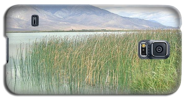 Wild Grass Galaxy S5 Case by Marilyn Diaz