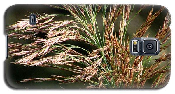 Galaxy S5 Case featuring the photograph Wild Grasses I by Kimberly Mackowski