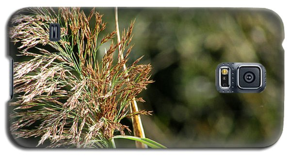 Galaxy S5 Case featuring the photograph Wild Grasses II by Kimberly Mackowski