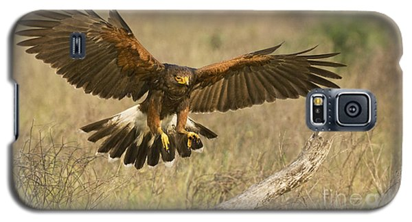 Wild Harris Hawk Landing Galaxy S5 Case