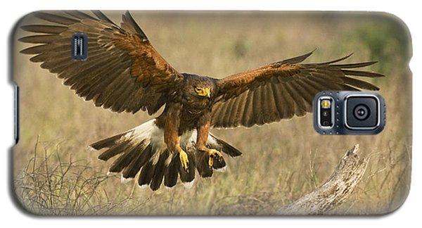 Wild Harris Hawk Landing Galaxy S5 Case