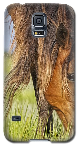 Wild Horse Grazing Galaxy S5 Case