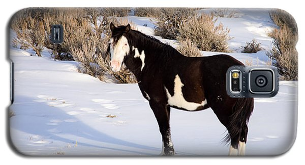 Wild Horse Stallion Galaxy S5 Case