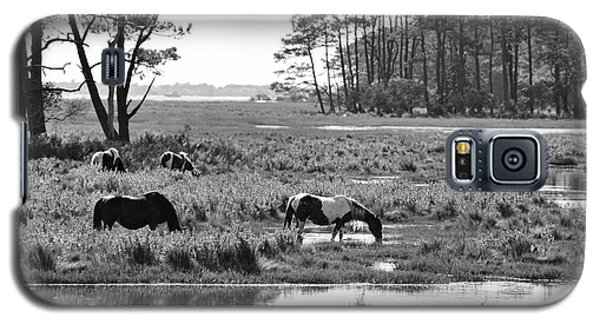 Wild Horses Of Assateague Feeding Galaxy S5 Case