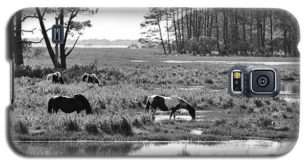 Wild Horses Of Assateague Feeding Galaxy S5 Case by Dan Friend