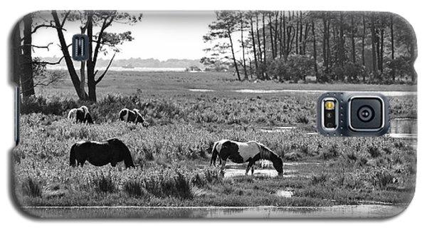 Wild Horses Of Assateague Feeding Galaxy S5 Case