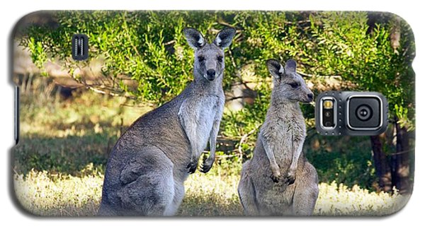 Wild Kangaroos Galaxy S5 Case by Stuart Litoff