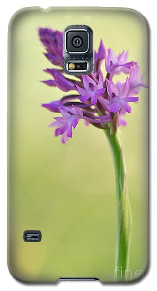 Galaxy S5 Case featuring the photograph Wild Orchid by Simona Ghidini