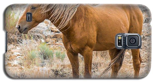 Wild Palomino Stallion Galaxy S5 Case