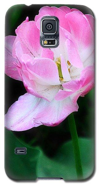 Wild Pink Rose Galaxy S5 Case