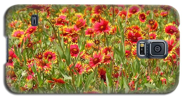 Galaxy S5 Case featuring the photograph Wild Red Daisies #1 by Robert ONeil