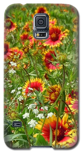 Galaxy S5 Case featuring the photograph Wild Red Daisies #2 by Robert ONeil