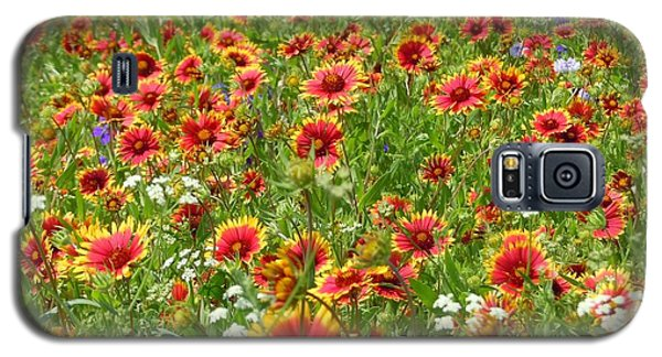 Galaxy S5 Case featuring the photograph Wild Red Daisies #3 by Robert ONeil