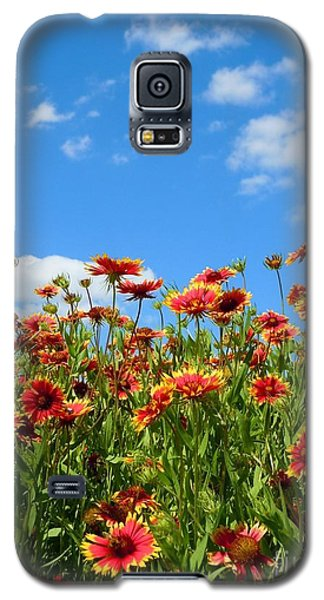 Galaxy S5 Case featuring the photograph Wild Red Daisies #5 by Robert ONeil