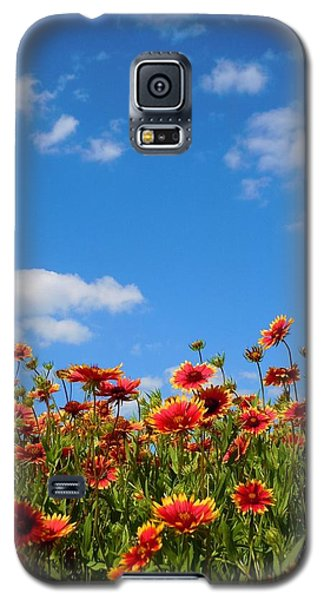 Galaxy S5 Case featuring the photograph Wild Red Daisies #6 by Robert ONeil