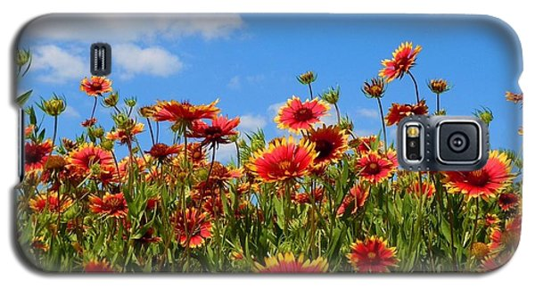 Galaxy S5 Case featuring the photograph Wild Red Daisies #7 by Robert ONeil