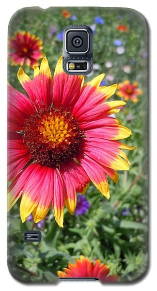 Galaxy S5 Case featuring the photograph Wild Red Daisy #1 by Robert ONeil