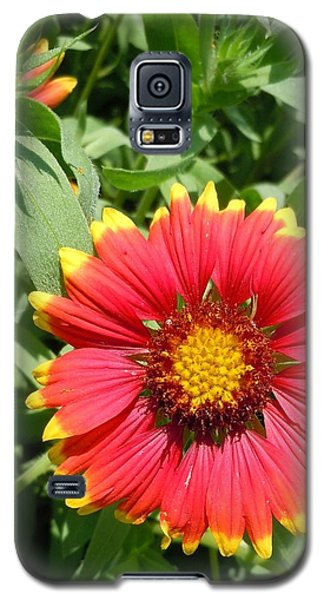 Galaxy S5 Case featuring the photograph Wild Red Daisy #2 by Robert ONeil