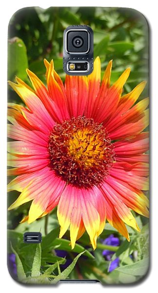 Galaxy S5 Case featuring the photograph Wild Red Daisy #3 by Robert ONeil