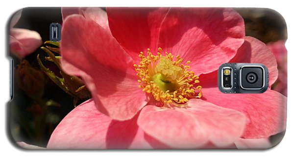Galaxy S5 Case featuring the photograph Wild Rose by Caryl J Bohn