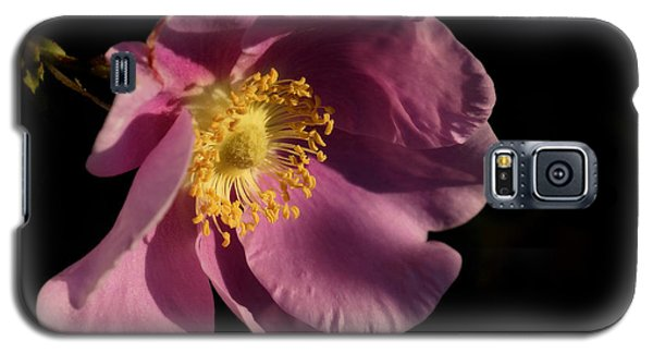 Galaxy S5 Case featuring the photograph Wild Rose by Inge Riis McDonald