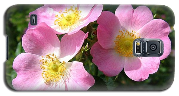 Wild Roses 1 Galaxy S5 Case