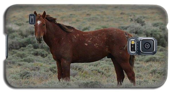 Wild Scars Galaxy S5 Case