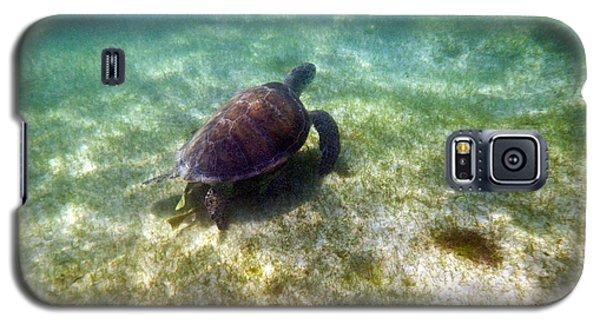 Galaxy S5 Case featuring the photograph Wild Sea Turtle Underwater by Eti Reid