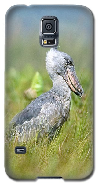 Wild Shoebill Balaeniceps Rex  Galaxy S5 Case