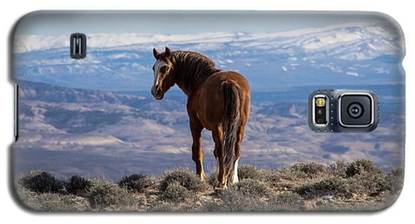 Wild Stallion Of Sand Wash Basin Galaxy S5 Case