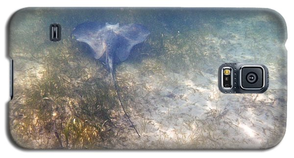 Galaxy S5 Case featuring the photograph Wild Sting Ray by Eti Reid